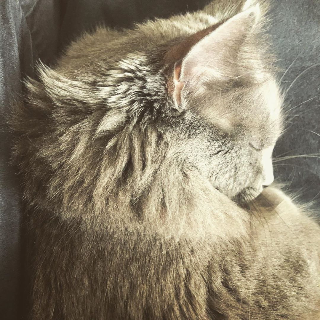 nap time its been a busy day of chasing string! #naptime #lunna #sleepy #kitty #catsofinstagram #prettykitty... #sleepykitty nap time its been a busy day of chasing string! #naptime #lunna #sleepy #kitty #catsofinstagram #prettykitty... #sleepykitty nap time its been a busy day of chasing string! #naptime #lunna #sleepy #kitty #catsofinstagram #prettykitty... #sleepykitty nap time its been a busy day of chasing string! #naptime #lunna #sleepy #kitty #catsofinstagram #prettykitty... #sleepykitty #sleepykitty