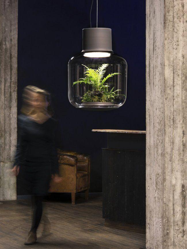 Pflanzengrün durch Licht Terrarium lampe, Pflanzen und