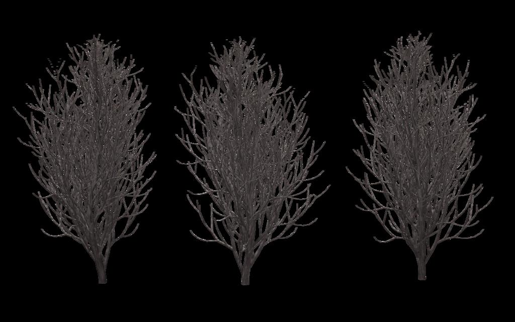 Winter Trees 01 Winter Trees Photoshop Textures Photoshop Resources