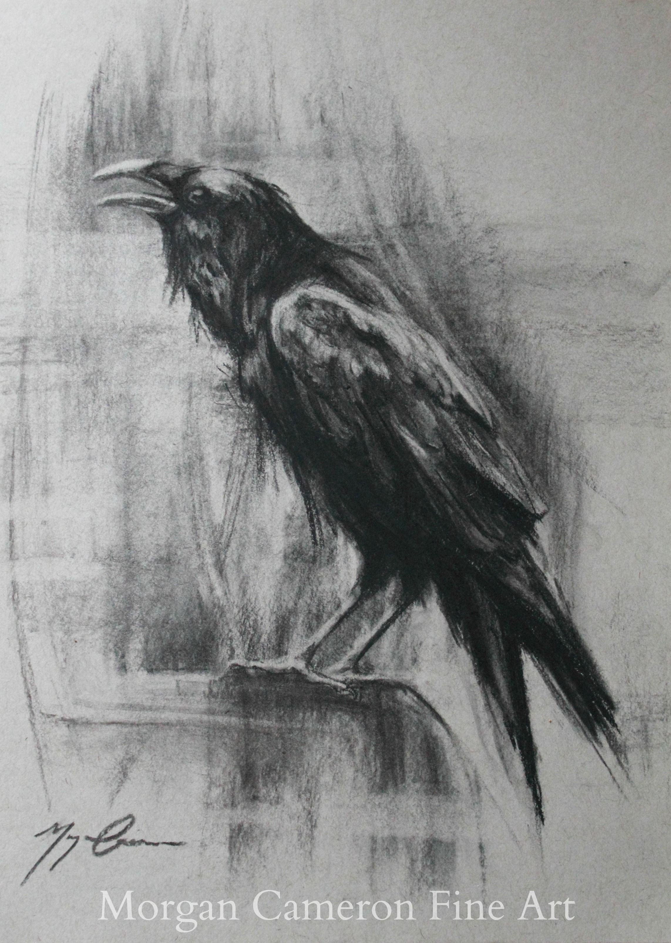 Charcoal Raven Drawing- Morgan Cameron Fine Art www ...