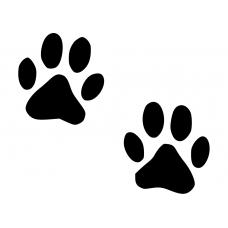 katten muursticker 10032 kattenpoot hondenpoot poezen