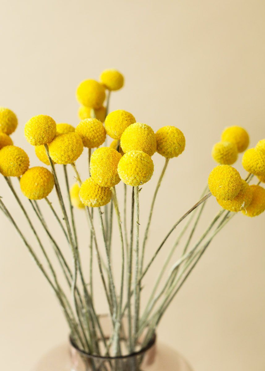 Pack Of 25 Dried Billy Button Craspedia In Yellow In 2020 Yellow Flower Arrangements Billy Buttons Yellow Wedding Centerpieces