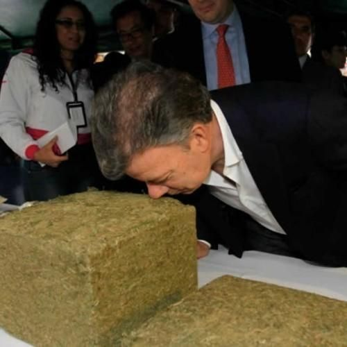 ¿Erradicaremos en 2016 la hipocresía de la guerra contra las drogas?