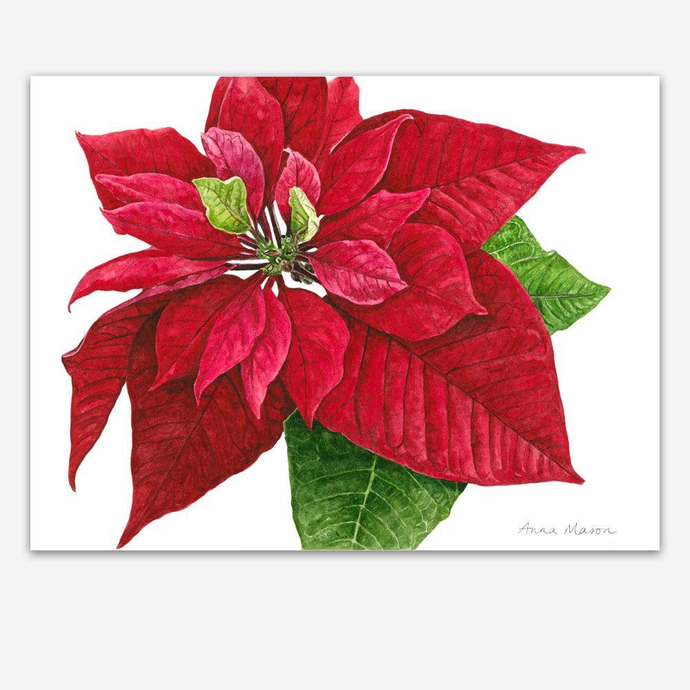 Tutorials Anna Mason Art Botanical Art Flower Painting Botanical Painting