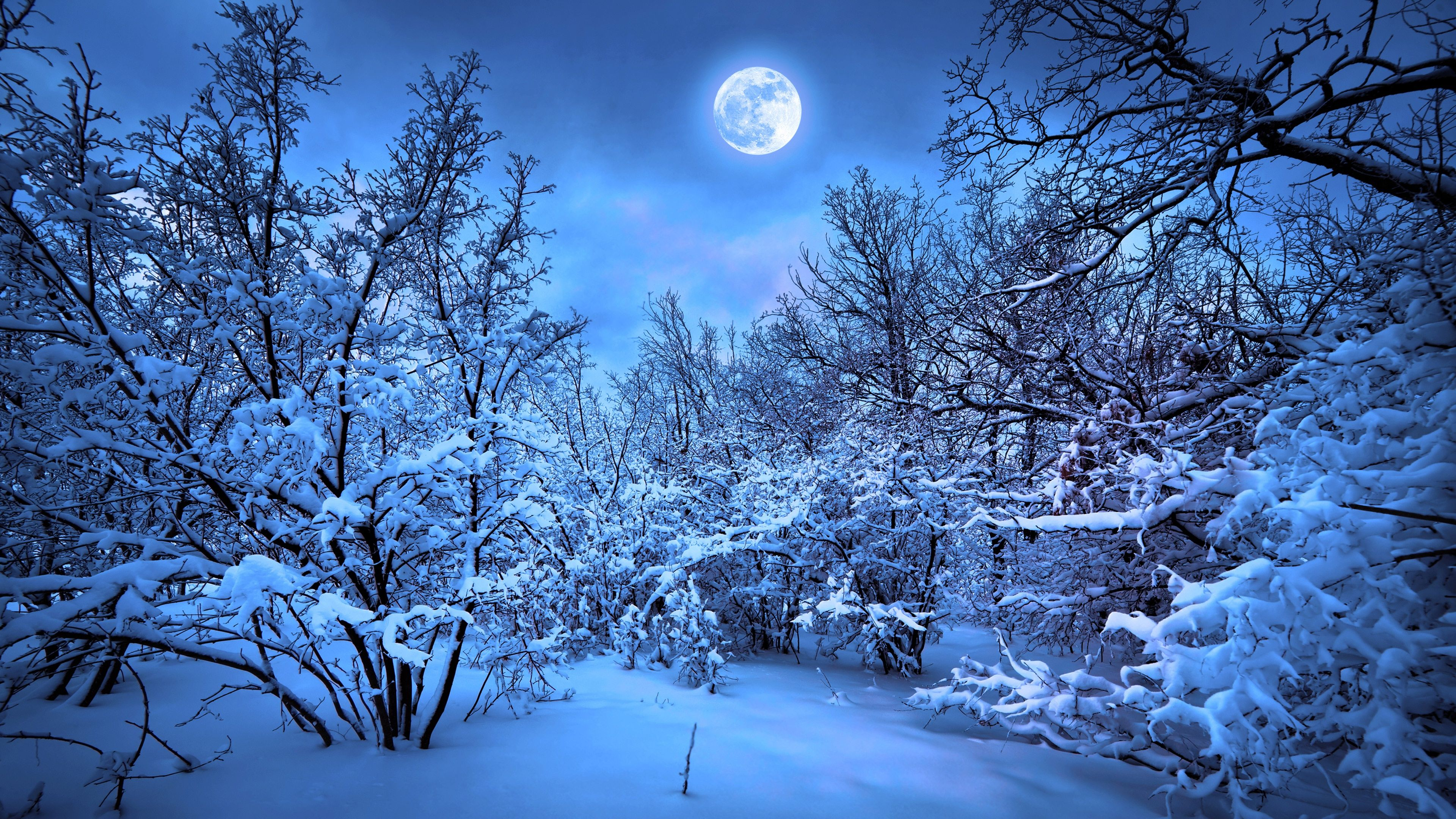 Winter 4k Wallpaper 3840 2160 Free Download Winter 4k Wallpaper 3840 2160 Wallpapers Download Winter 4k Wallpaper 38 Winter Moon Winter Wallpaper Snow Forest
