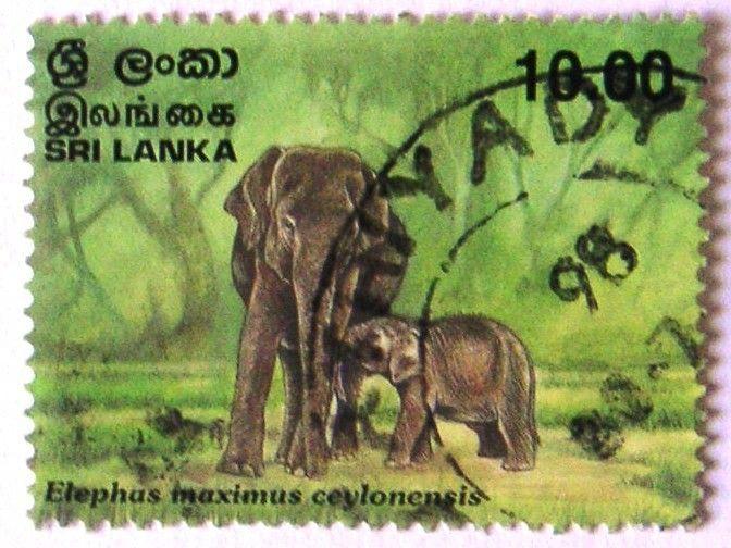 Elephant And Baby | Elephants | Pinterest | Elefantes