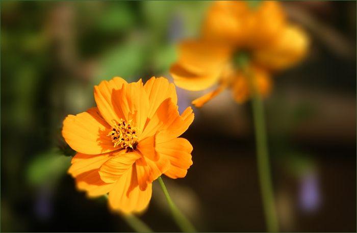 Sommerblumen im Juli - Jahreszeiten - Galerie - Community