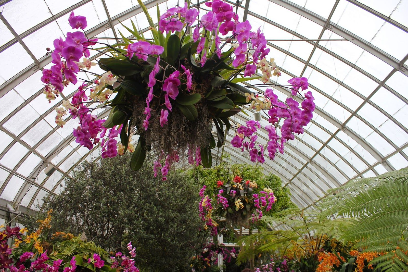 Orchid Chandeliers At NY Botanical Garden. Orchid Chandeliers At NY Botanical  Garden Spring Seems To