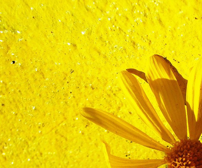 Yellow - via Darwin Bell - flickr