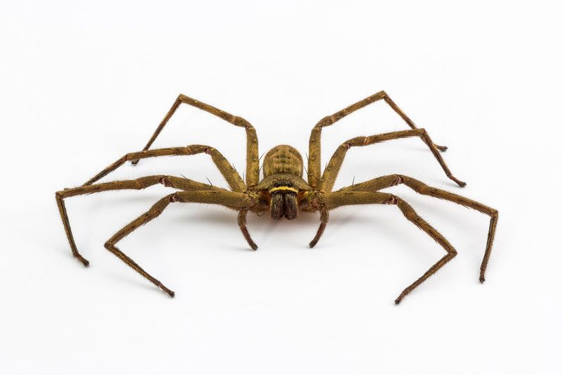 Ukraine's Mutant Spider: Was the giant spider a product of the Chernobyl Nuclear Plant disaster?  Image credit: canstockphoto.