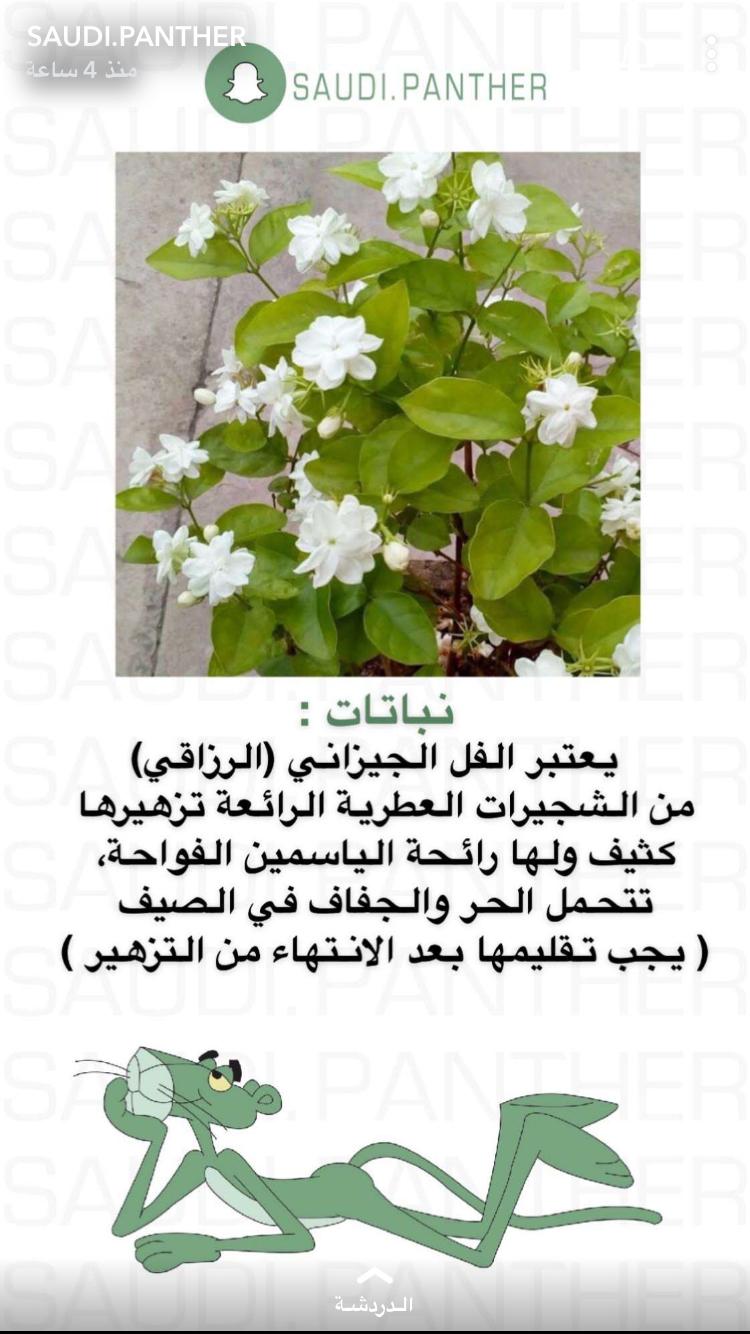 Pin By Istifada استفادة On نباتاتا Vegetable Garden Planning Planting Succulents Jasmine Plant