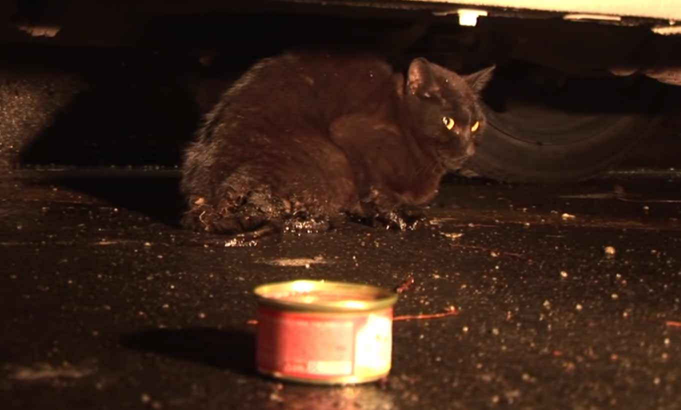 Cat Who Lost Her Kittens Cries When She Meets An Abandoned Kitten In 2020 Kittens Cats And Kittens Cats