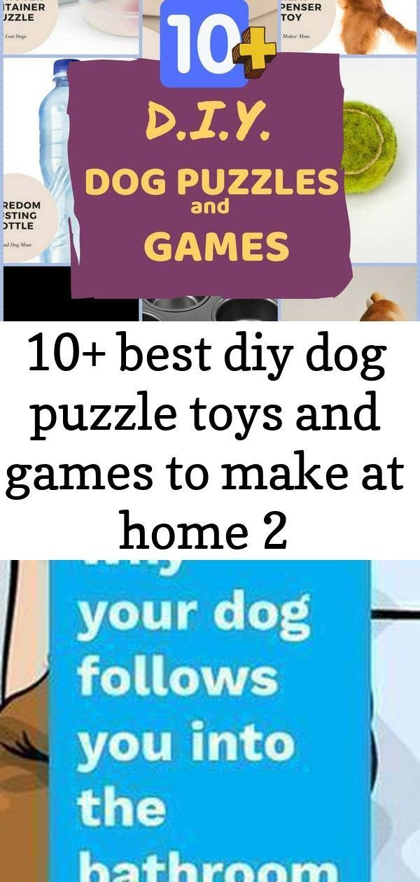 10+ best diy dog puzzle toys and games to make at home 2 #bedfalls62 10+ Best DIY Dog Puzzle Toys and Games to Make at Home. Treat your dog with these easy to make dog brain games and puzzles. #dogs #dogsandpuppies #dogtraining Here are 12 different signs from your dog and what they are actually trying to say to you. #dogs #puppies #animals #pets #dogclothes #bedfalls62 #dogclothes Appreciate  amusing  pet memes that include cat memes, your  preferred  pet dog memes,  amusing squirrel memes,  ch #bedfalls62