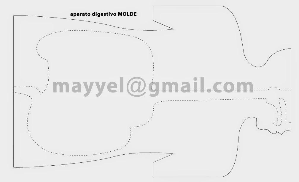 Molde Aparato Digestivo | CN | Pinterest | Aparato digestivo ...