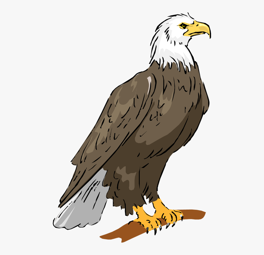 Bald Eagle Eagle Png Image Clipart Philippine Eagle Drawing With Color Transparent Png Is Free Transparent Png Eagle Drawing Philippine Eagle Eagle Cartoon
