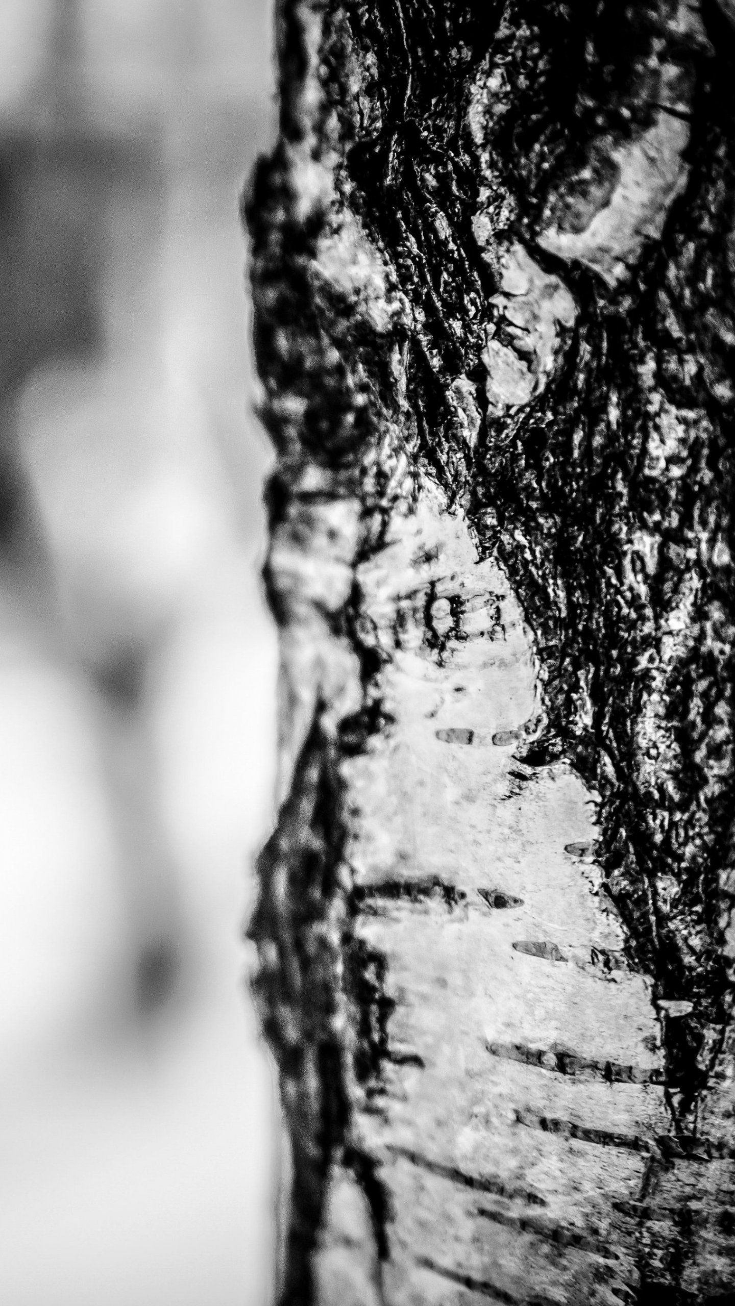 Birch Tree in Winter iPhone Mobile Wallpaper | iPhone Wallpaper ...