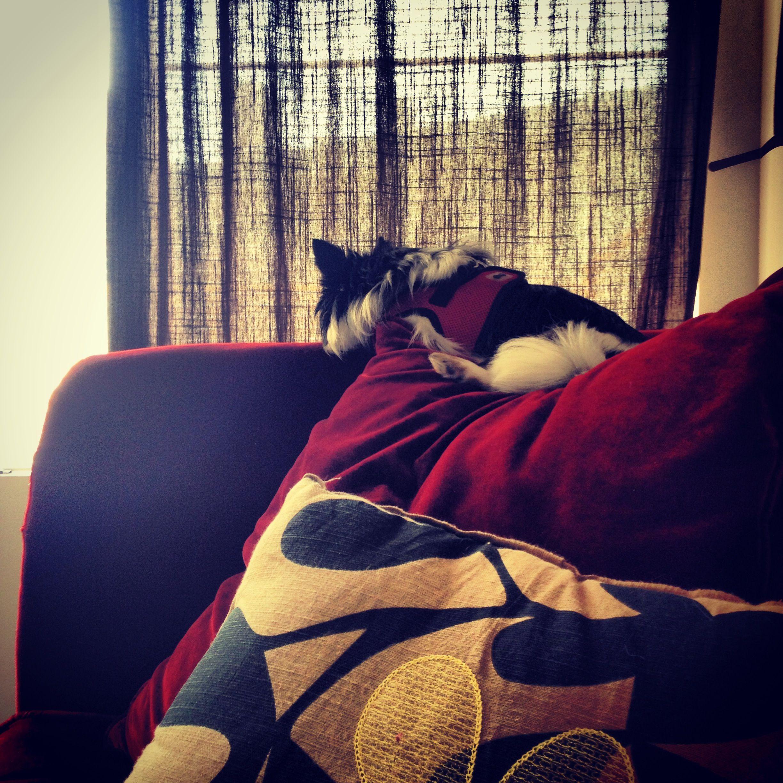 His royal perch.