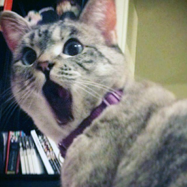 Nala, The Shocked Cat