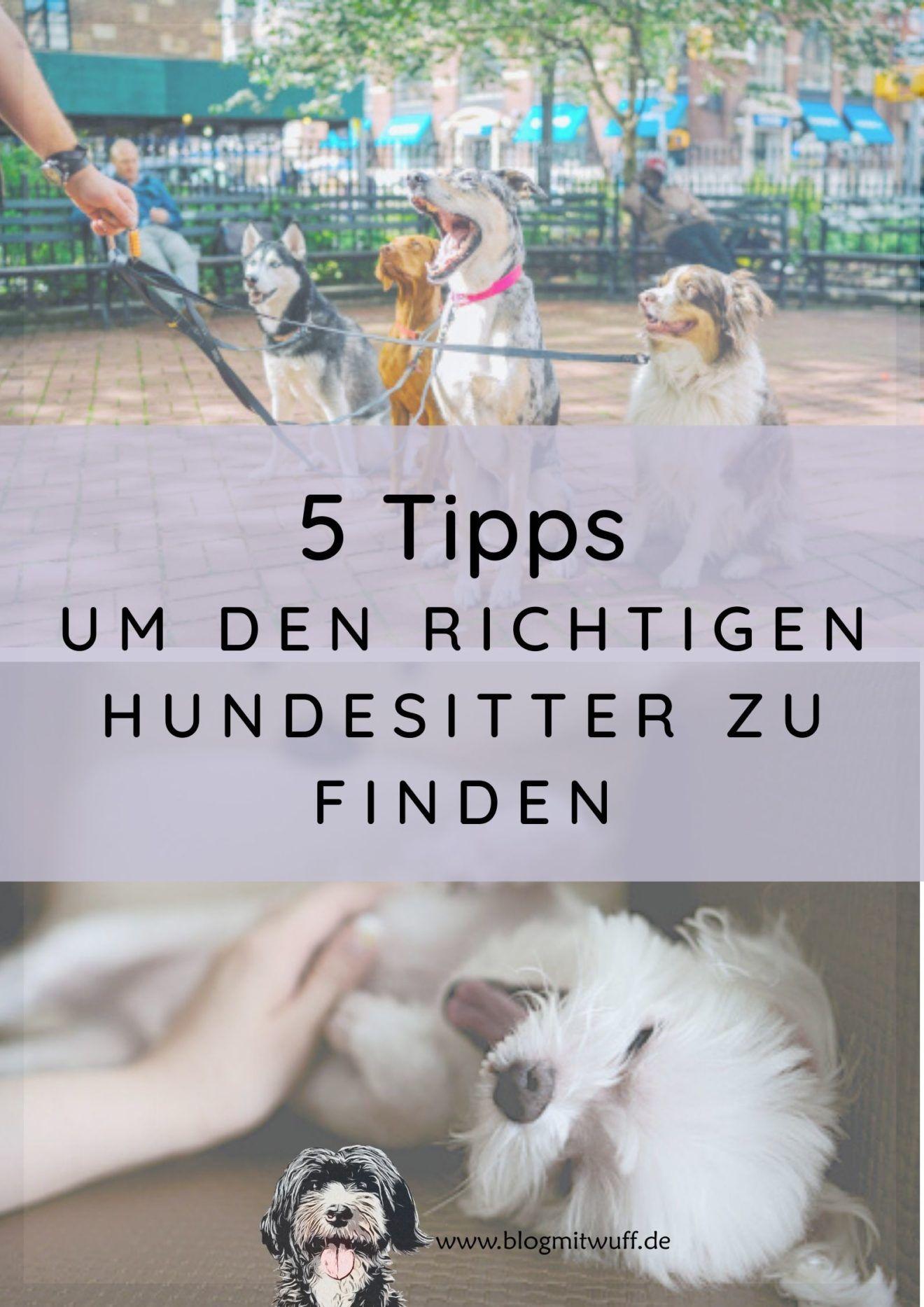 Blog Mit Wuff Hundeblog Hundeblog Menschliches Diverses Gedanken Eines Hundehalters In 2020 Hunde Tag Halte Durch Hundeliege