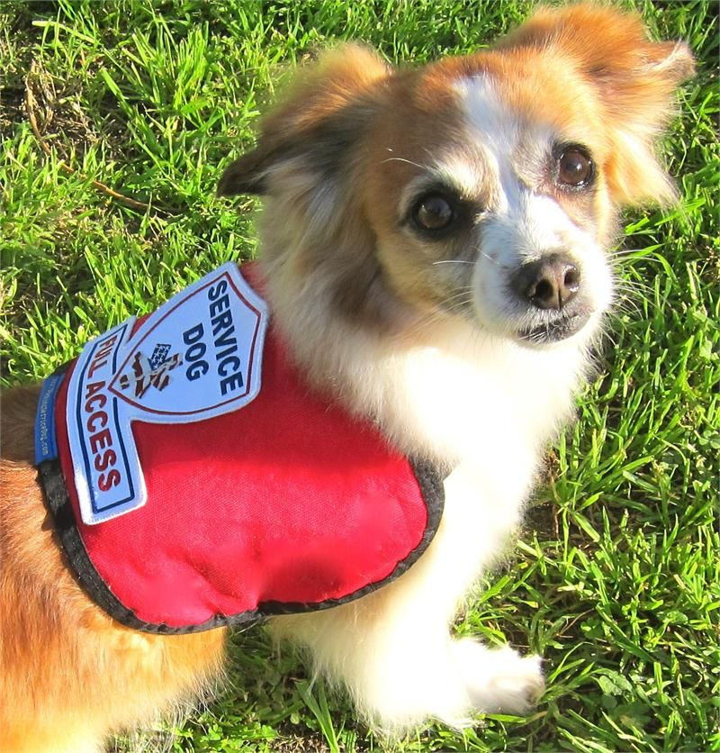 Premium Service Dog Vest For Smaller Service Dogs Service Dogs