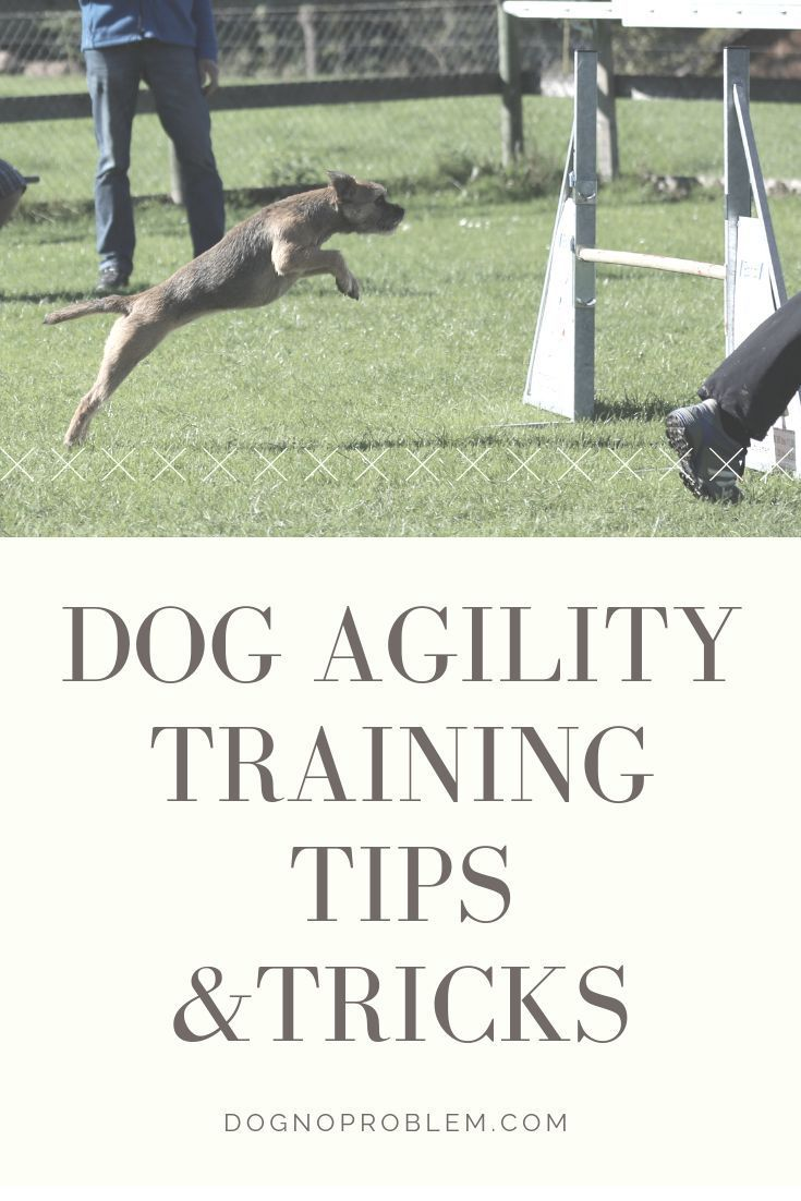 Dog Agility Training Almost Every Trick You Should Own With 3