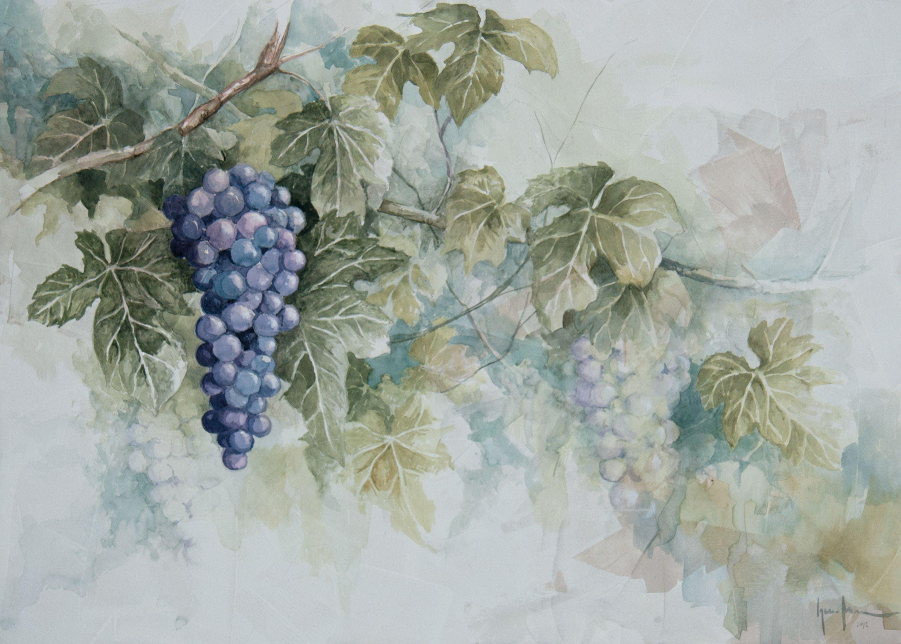 Uva ( Acuarela / Watercolor ) Ignacio Muñoz Cano ©