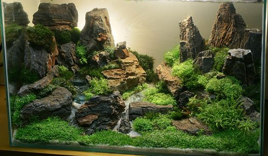 Aquascape Design for many fish tank hobbyists, aquascaping or aquarium aquascape