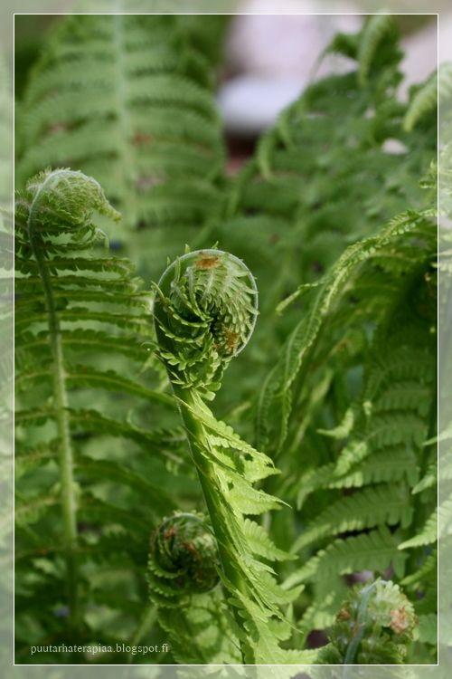 Mökkipuutarhassa: Neljä vuodenaikaa puutarhassa