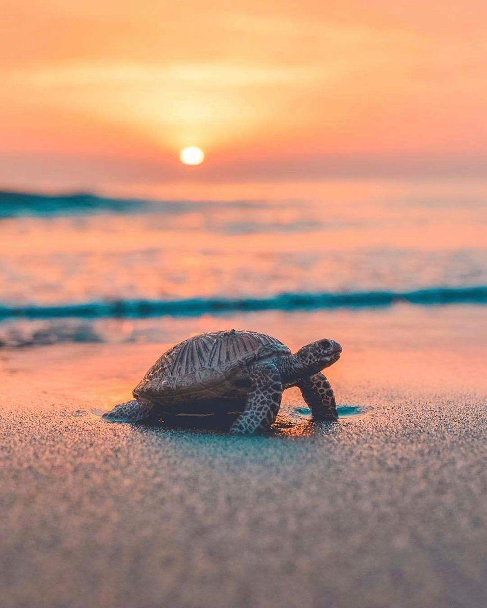 Duro trabajo Fondos animales, Animáles de océano