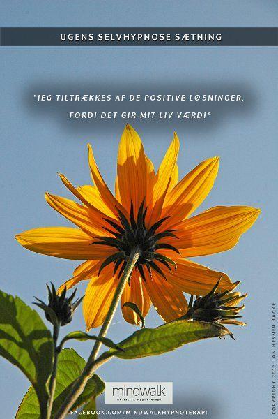 Jeg Tiltraekkes Af De Positive Losninger Fordi De Giver Mit Liv Vaerdi Med Billeder Hypnoterapi Positiv