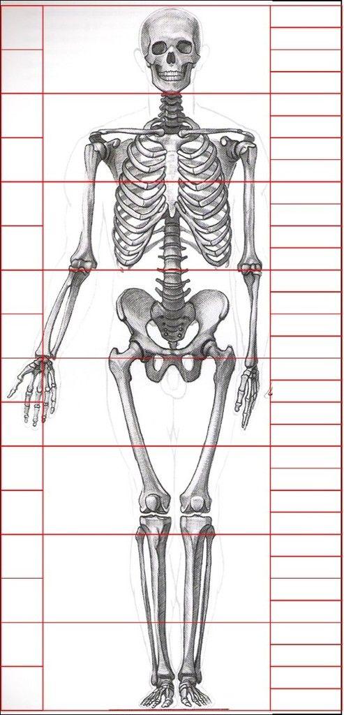 Gottfried Bammes - Die Gestalt des Menschen #Skeleton #Bammes ...