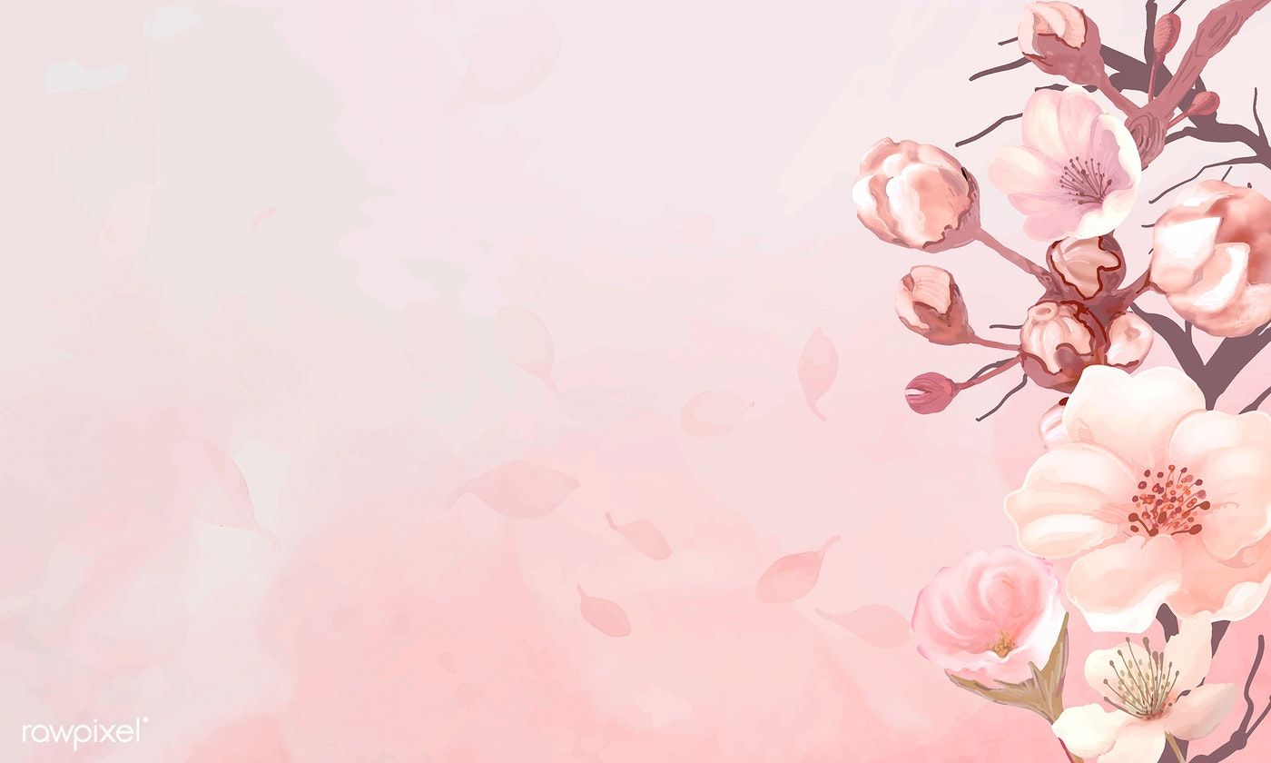 Hand Drawn Cherry Blossoms On A Pink Background Vector Premium Image By Rawpixel Com Cherry Blossom Background Cherry Blossom Pink Background