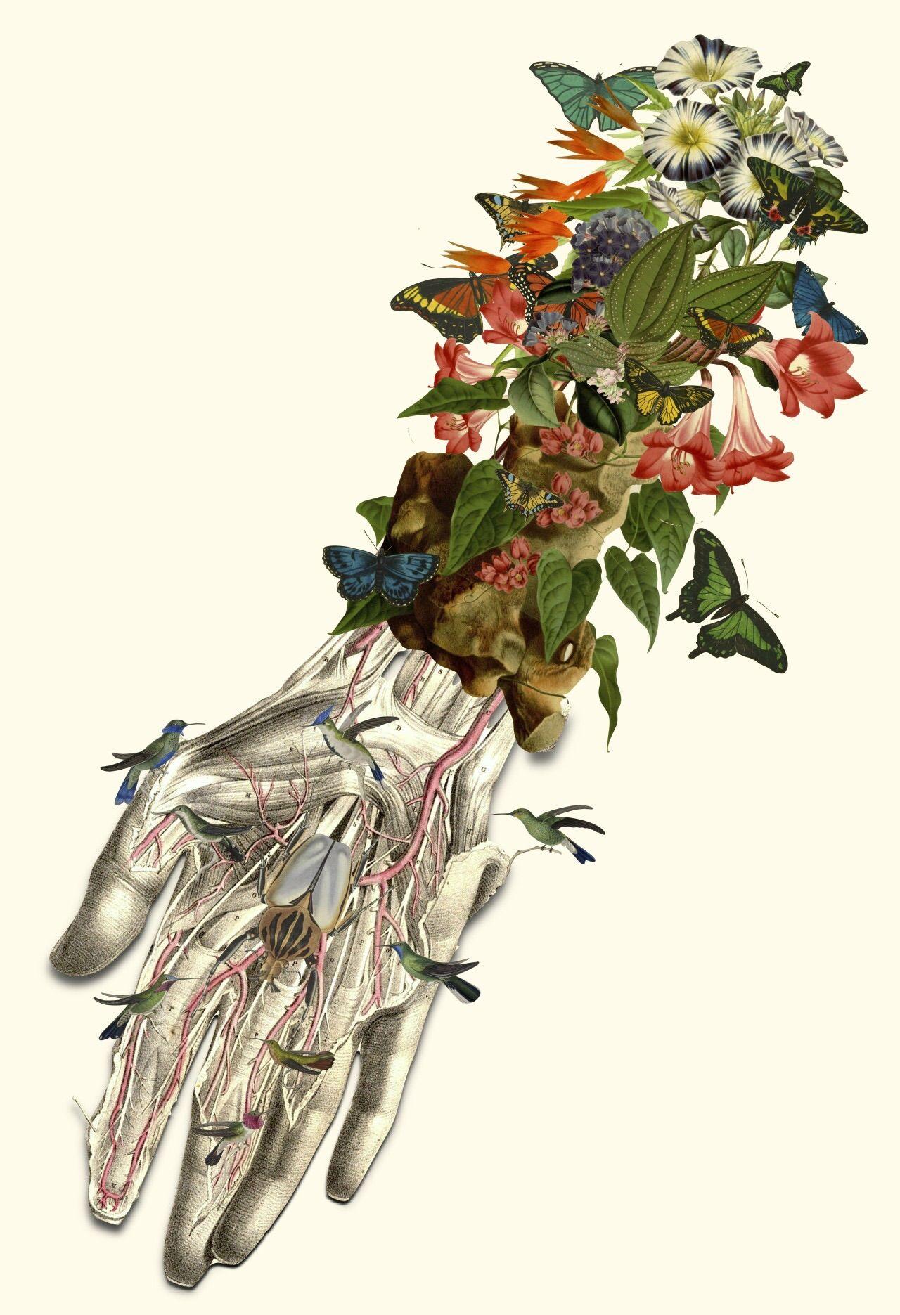 Pin von Mateus Leite auf Anatomia | Pinterest