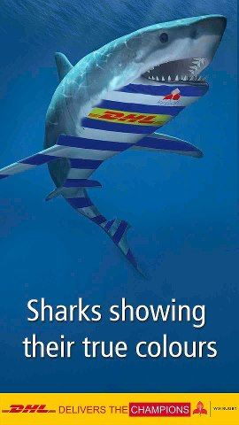 Stormers Vs Sharks Rugby Pictures Shark Show Ocean Creatures