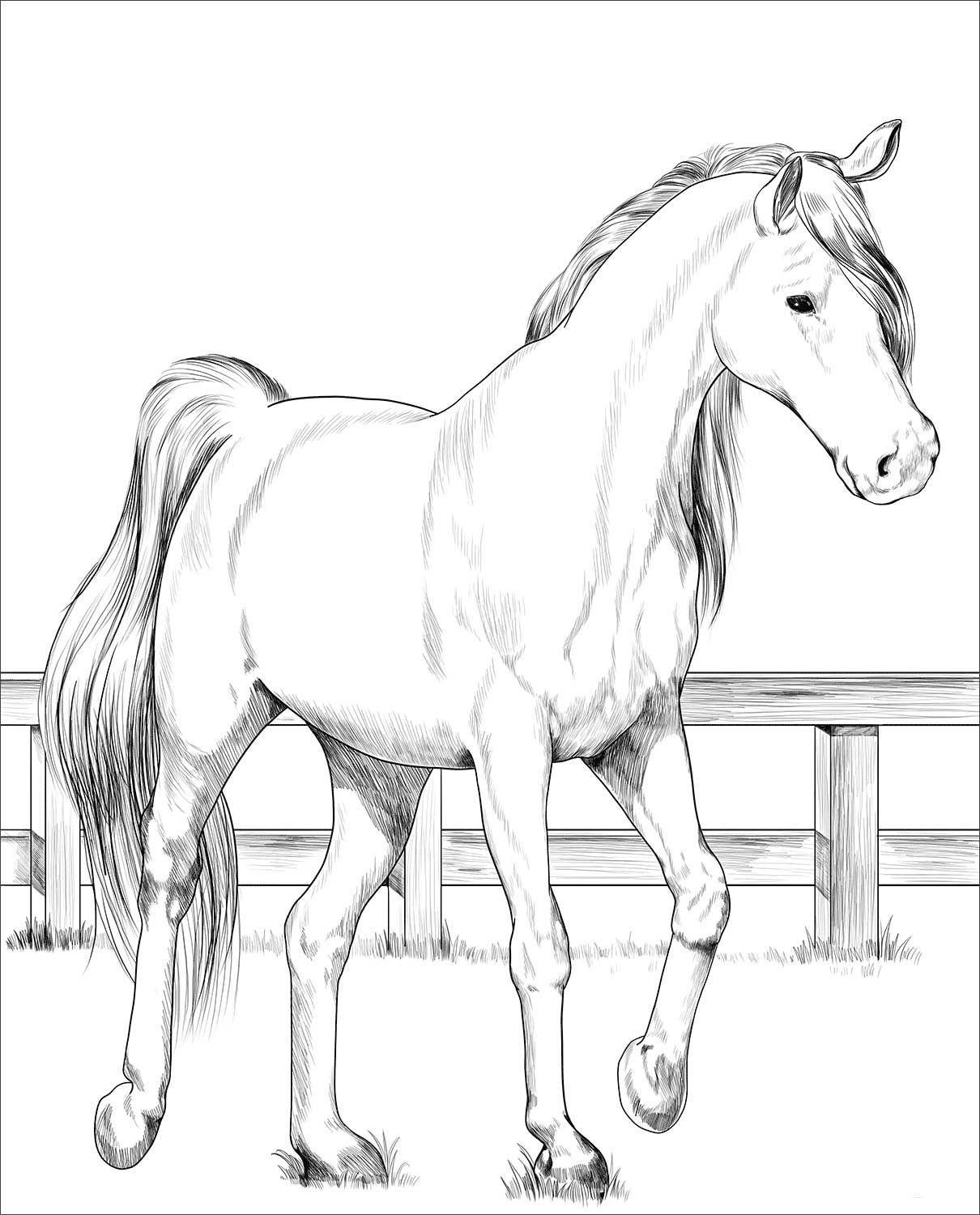 Trakehner Horse Coloring Page Horse Coloring Books Horse Coloring Pages Horse Coloring