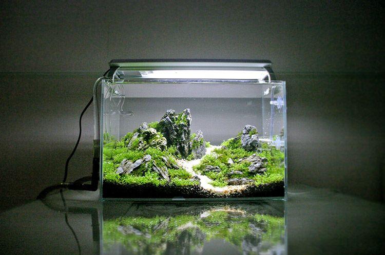 Img wabi kusa pinterest for Kampffisch aquarium