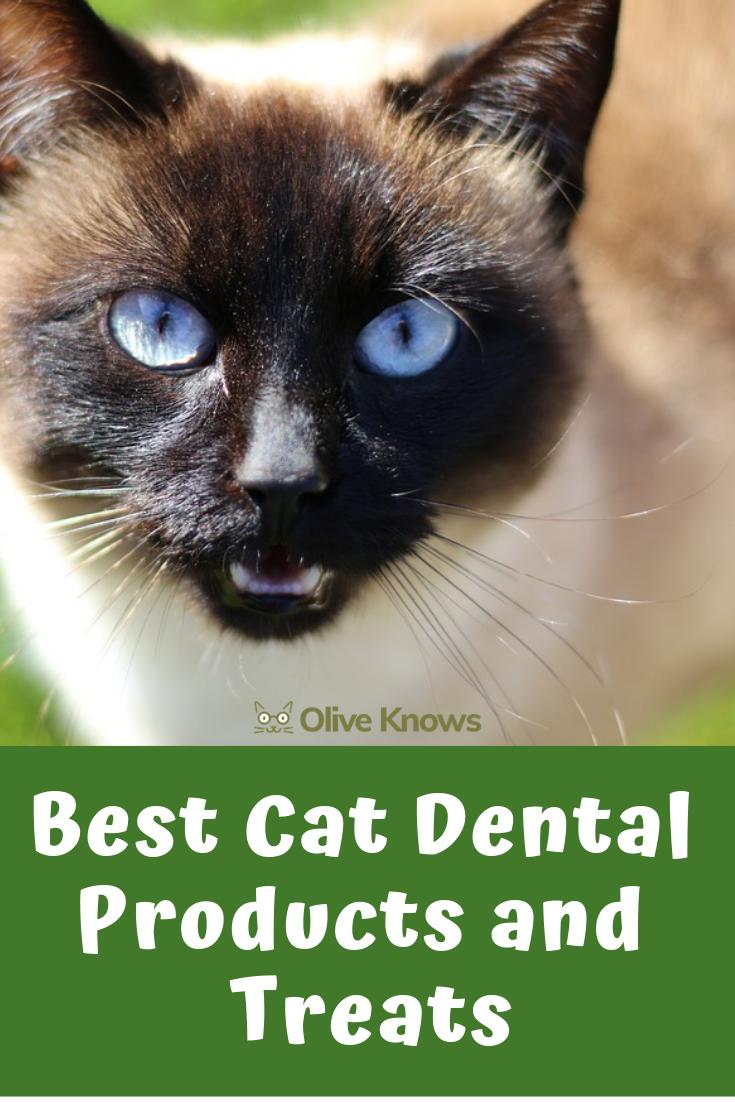 Best Cat Dental Products And Treats Cat Dental Health Cool Cats Cat Health