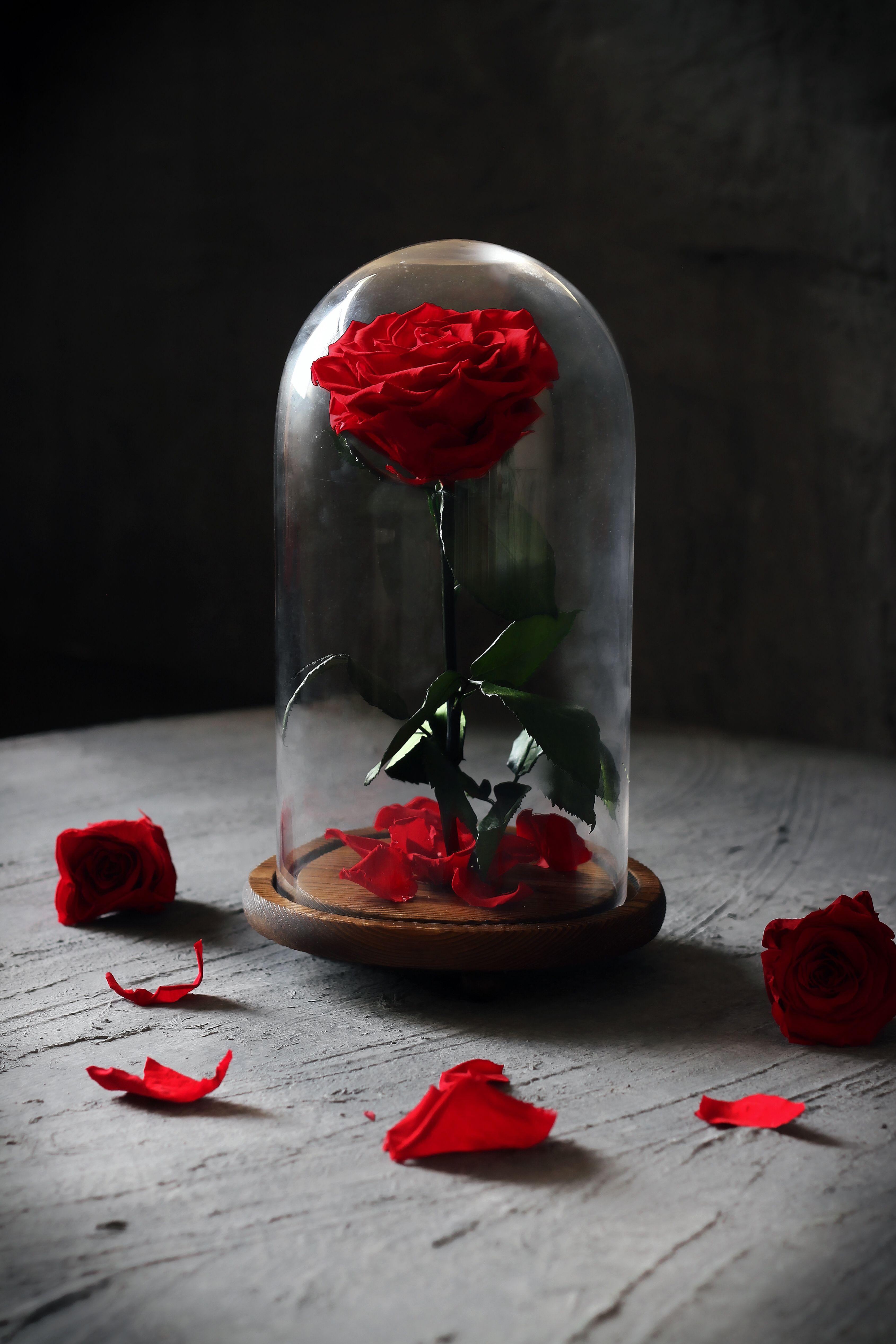 وردة ايلوبا روز احمر داخل فازة زجاجية Snow Globes Decor Home Decor