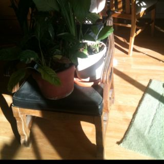 Plants on a low profile chair in a friend of a friend's mom's house