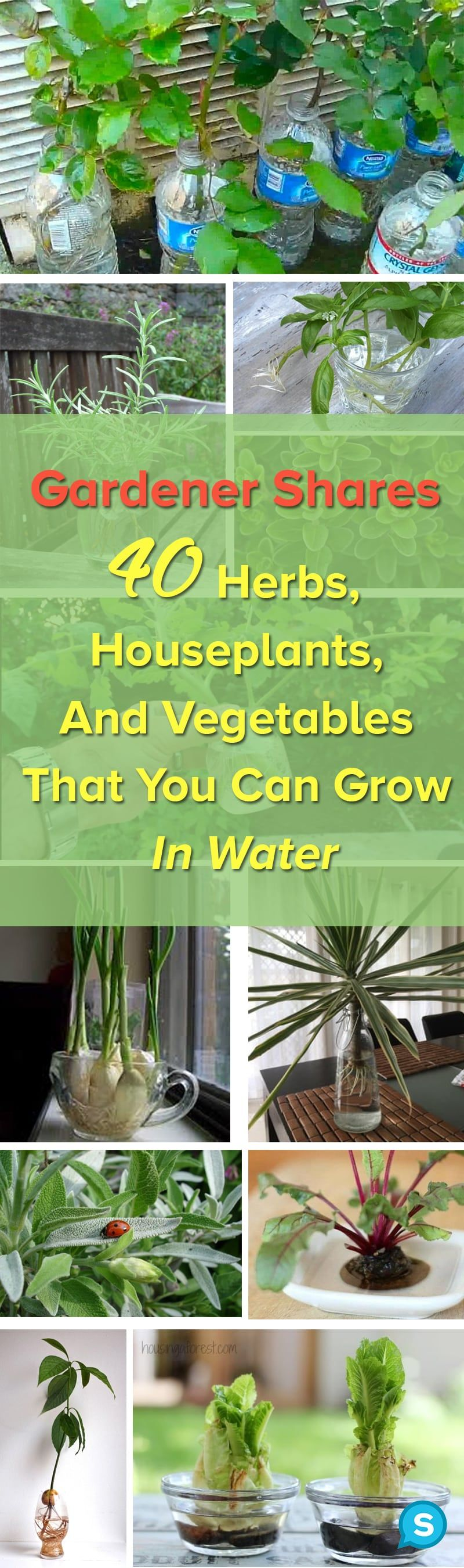 You Don T Need Soil To Grow Plants Here Are 40 Herbs And 400 x 300