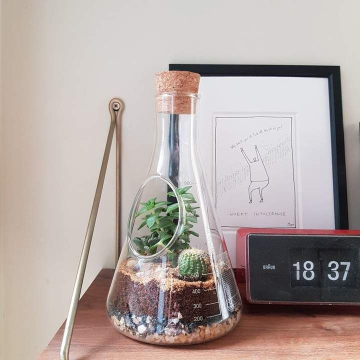 Chemistry Glass Terrarium -   16 plants Decor glass ideas