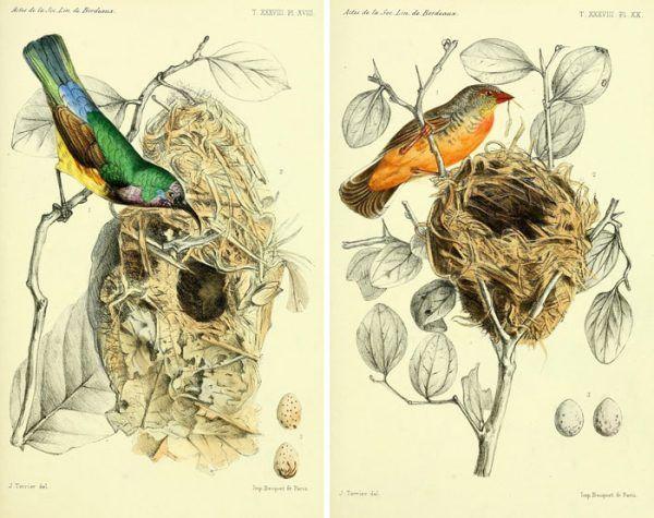 Remodelaholic 25 Free Vintage Bird Printable Images Printables