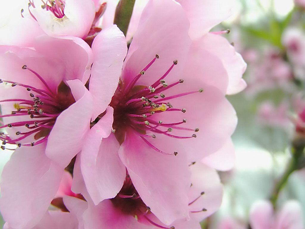 Flowers For Weddings Spring Flowers Flowers Wallpapers And