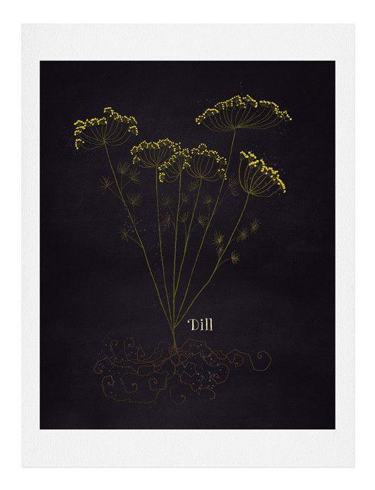 'Herb Garden Dill' by Joy Laforme Graphic Art