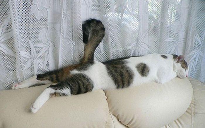 Sleeping Cats 021 Crazy Cats
