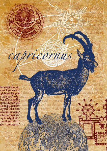 capricornus | steinbock Canvas Print
