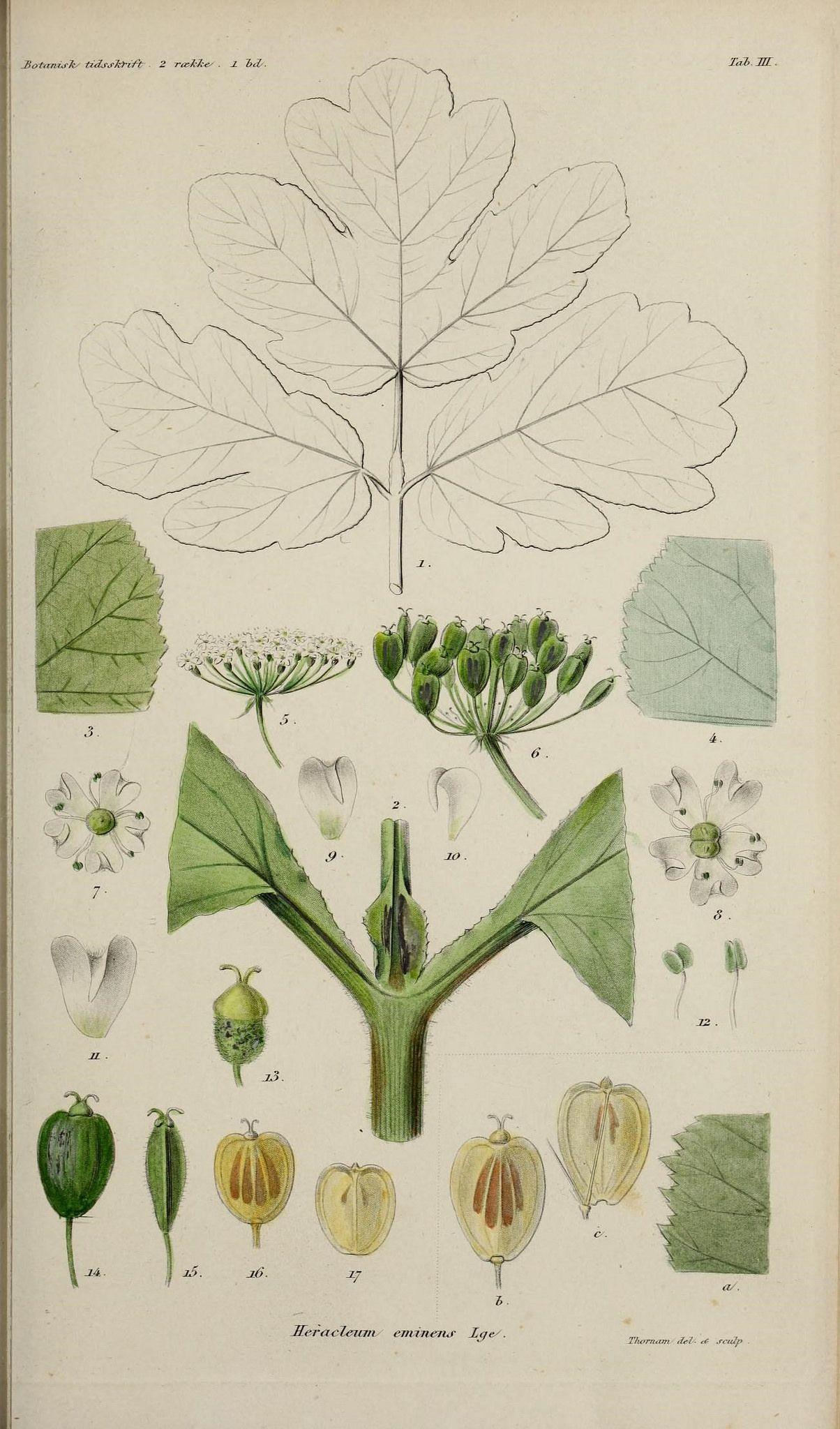 "https://flic.kr/p/sTfaVN | n208_w1150 | Botanisk tidsskrift.. København,Dansk botanisk forening [etc.]. <a href=""http://biodiversitylibrary.org/page/47166848"" rel=""nofollow"">biodiversitylibrary.org/page/47166848</a>"