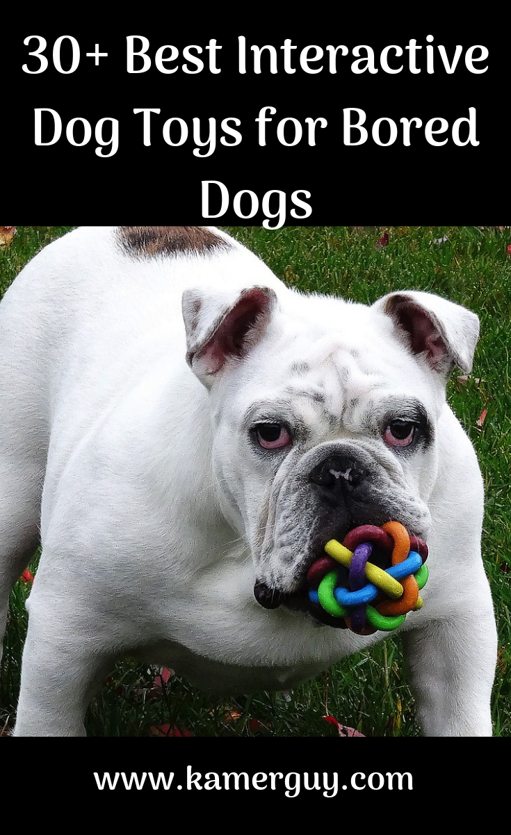 Interactive Dog Toys Exercise 30+ Best Interactive Dog Toys for Bored Dogs