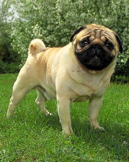 Dogs Dog Breeds Dogs Dog Pee