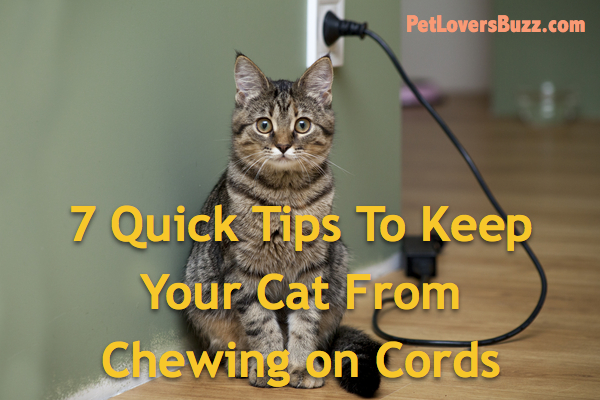 7 Quick Tips To Keep Your Cat From Chewing On Cords
